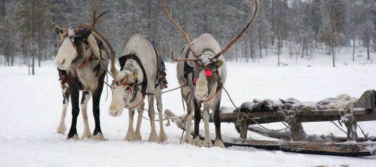 Learn Saami Online - Level 1